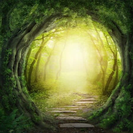 skov meditation