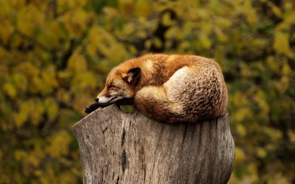 søvnløshed søvnproblemer